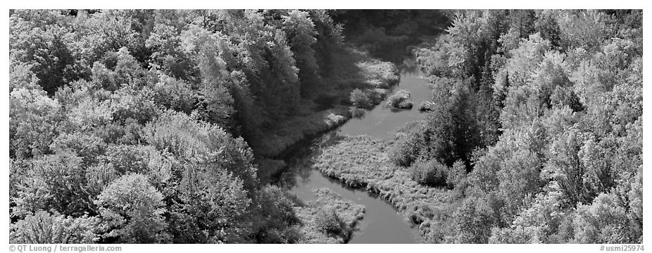 Forest in fall color and river from above. Upper Michigan Peninsula, USA (black and white)