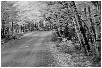Rural road with fall colors, Hiawatha National Forest. Upper Michigan Peninsula, USA ( black and white)