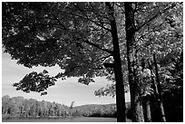 Tree and lake, Hiawatha National Forest. Upper Michigan Peninsula, USA ( black and white)