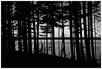 Lake Superior seen through dense trees at sunset,  Pictured Rocks National Lakeshore. Upper Michigan Peninsula, USA (black and white)