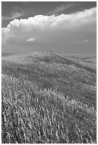 Grassy hills. North Dakota, USA (black and white)