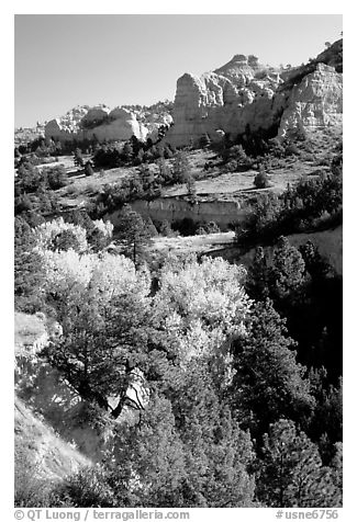 Trees and sandstone cliff. South Dakota, USA (black and white)