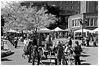 Saturday market in autumn. Concord, New Hampshire, USA ( black and white)
