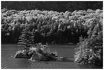 Islet on Beaver Pond in autumn, White Mountain National Forest. New Hampshire, USA (black and white)