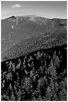 Conifer treetops and mountains, White Mountain National Forest. New Hampshire, USA (black and white)