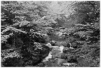 Cascades of the Pemigewasset River in fall, Franconia Notch State Park. New Hampshire, USA (black and white)