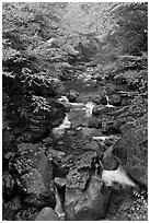 Cascading river in autumn, Franconia Notch State Park. New Hampshire, USA (black and white)