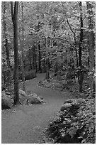 Path in forest, Franconia Notch State Park. New Hampshire, USA ( black and white)