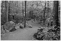 Trail in forest, Franconia Notch State Park. New Hampshire, USA (black and white)