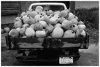 Truck loaded with pumpkins. New Hampshire, New England, USA ( black and white)