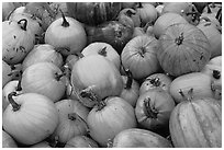 Pumpkins. New Hampshire, USA ( black and white)