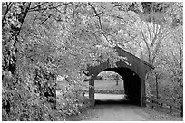 Covered bridge in autumn, Bath. New Hampshire, USA (black and white)
