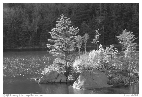 Trees on small rocky islet, Beaver Pond, Kinsman Notch. New Hampshire, USA