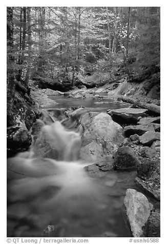 Stream in fall. New Hampshire, New England, USA (black and white)