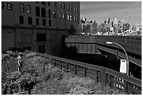 Garden on the High Line. NYC, New York, USA ( black and white)