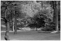 Lawn, trees, and flowers, Central Park. NYC, New York, USA (black and white)
