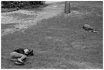 Men sleeping on lawn, Central Park. NYC, New York, USA ( black and white)