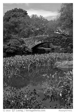 Aquatic plants and stone bridge, Central Park. NYC, New York, USA (black and white)