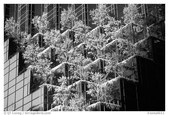 Hanging gardens on Trump Tower. NYC, New York, USA (black and white)