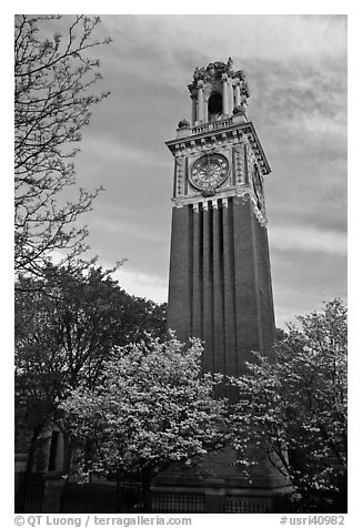 Trees in bloom and Carrie Tower, Brown University. Providence, Rhode Island, USA (black and white)