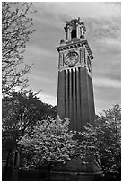 Trees in bloom and Carrie Tower, Brown University. Providence, Rhode Island, USA ( black and white)