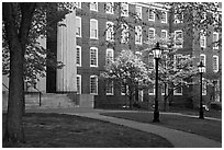 Columns, brick buildings, flowering dogwoods, and gas lamps, Brown University. Providence, Rhode Island, USA (black and white)