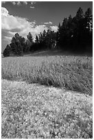 Hailstones in meadow, Black Hills National Forest. Black Hills, South Dakota, USA (black and white)