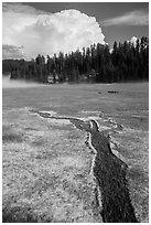 Meadow with hailstones, hail storm clearing, Black Hills National Forest. Black Hills, South Dakota, USA ( black and white)