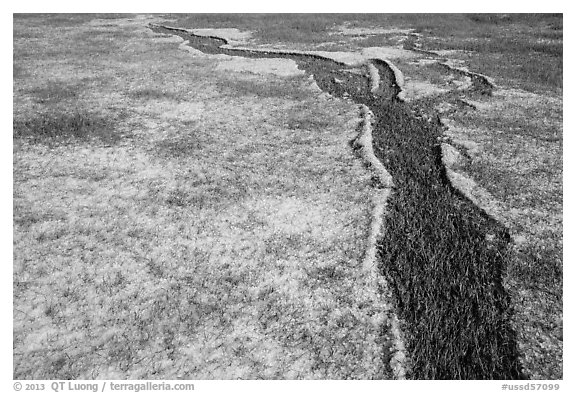 Hailstones form pattern in meadow, Black Hills National Forest. Black Hills, South Dakota, USA (black and white)