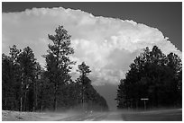 Cumulonimbus cloud above roadway, Black Hills National Forest. Black Hills, South Dakota, USA ( black and white)