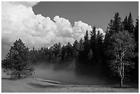 Forest, meadow, and cumulonimbus, Black Hills National Forest. Black Hills, South Dakota, USA ( black and white)