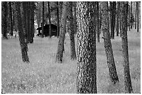 Cabins in Custer State Park. South Dakota, USA (black and white)