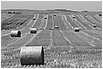 Field and rolls of hay. South Dakota, USA (black and white)