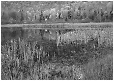 Autumn Reflections, Green Mountains. Vermont, New England, USA ( black and white)