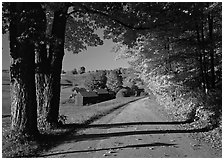 Maple trees, gravel road, and Jenne Farm, sunny autumn morning. Vermont, New England, USA (black and white)