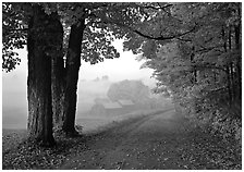 Maple trees, gravel road, and Jenne Farm, foggy autumn morning. Vermont, New England, USA (black and white)
