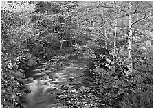 Stream and birch trees. Vermont, New England, USA ( black and white)