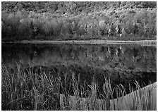 Reeds, and reflection of hill, Green Mountains. Vermont, New England, USA ( black and white)