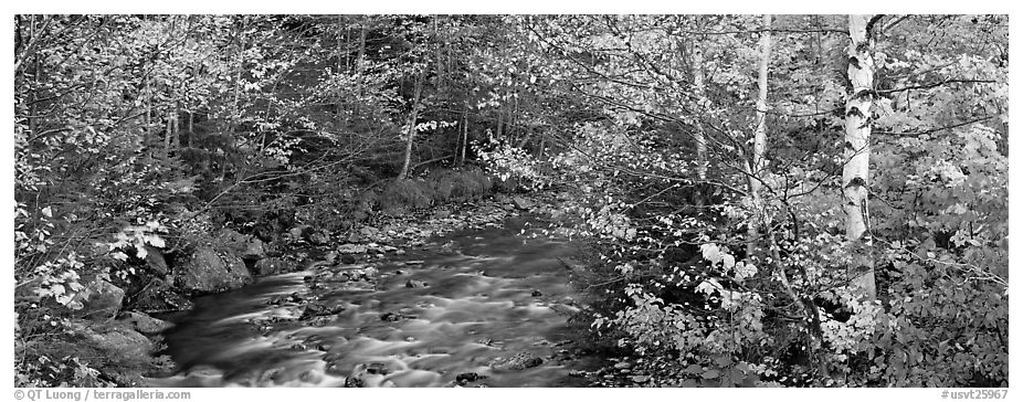 Autumn forest landscape with stream. Vermont, New England, USA (black and white)