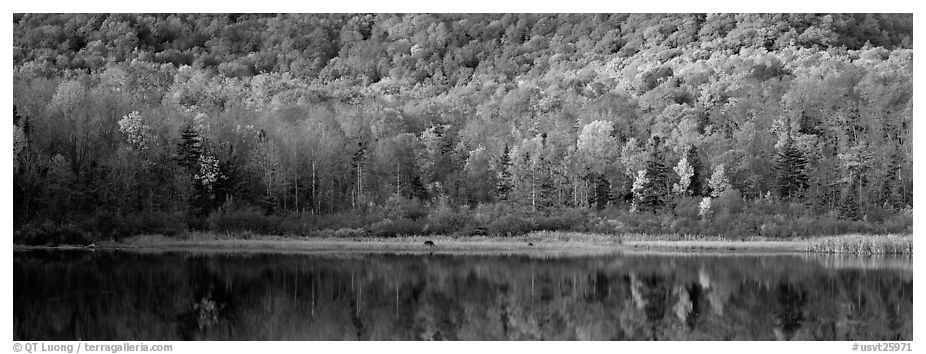 Hillside forest and pond in the fall. Vermont, New England, USA (black and white)