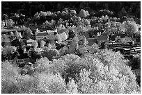 Village surounded by trees in brilliant fall colors. Vermont, New England, USA (black and white)