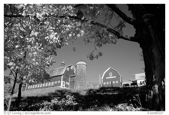 Pomeret Highlands Farm near Woodstock. Vermont, New England, USA (black and white)