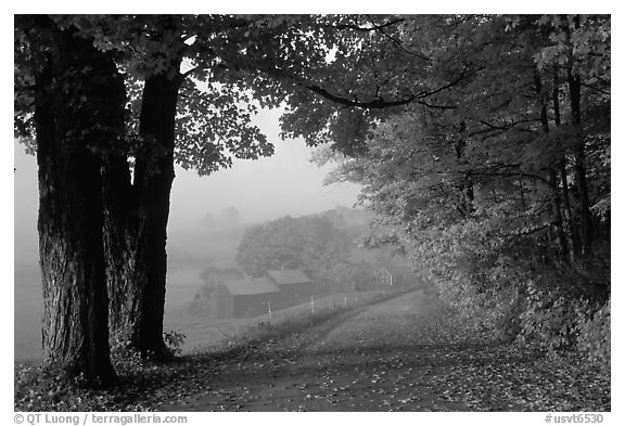 Jenne Farm, foggy morning. Vermont, New England, USA (black and white)