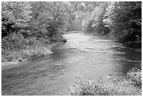 River with trees in autumn color. Vermont, New England, USA (black and white)