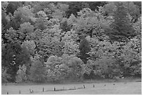 Meadow, fence, and colorful trees. Vermont, New England, USA (black and white)