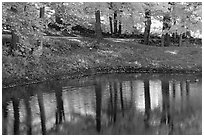 Pond with tree reflections. Vermont, New England, USA ( black and white)