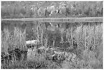 Reeds and pond, Green Mountains. Vermont, New England, USA (black and white)