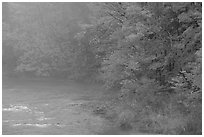 Misty river with trees in fall foliage. Vermont, New England, USA (black and white)