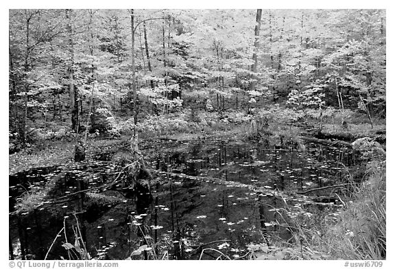 Pond surrounded by trees in fall colors. Wisconsin, USA (black and white)