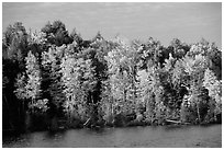 Trees in fall colors bordering a lake. Wisconsin, USA (black and white)
